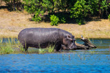 Chobe National Park - 173014445
