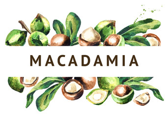 Macadamia nuts and green leaves background. Watercolor  illustration