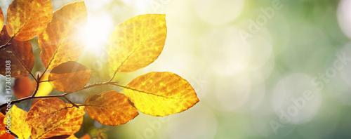 Leinwandbild Motiv Herbst