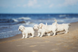 group of puppies walking on the beach