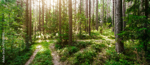 Foto op Canvas Natuur Wild trees in forest