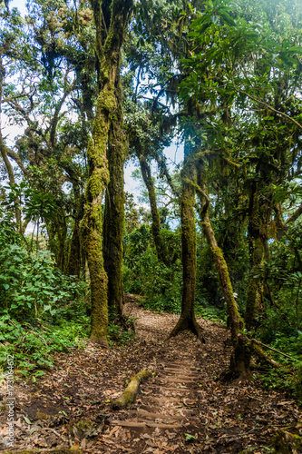 Fotobehang Betoverde Bos Trail through cloud forest covering San Pedro volcano, Guatemala
