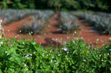 butterflies and plantations - 173079280