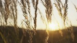 Field plants in sunlight - 173081664