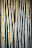 Close-up of stack of bamboo in drying