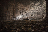 winterlicher Wald nachts mit Scheinwerferlicht