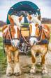 Leinwanddruck Bild - Pferdekutsche, Kremserfahrt bei Kap Arkona auf Rügen
