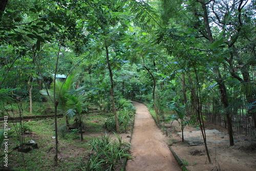 Keuken foto achterwand Weg in bos Ssri Lanka