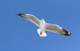 Seagull flying in beautiful sky.