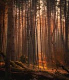 Las o wschodzie