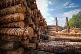 Holzwirtschaft - Lagerung von Rundholz für Sägewerk - 173248864