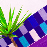 Plant on the background of a colored wall Mini palm minimal art design - 173266432