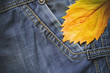 jeans. autumn leaf. horizontally.