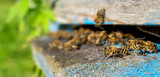 Life of worker bees. The bees bring honey. - 173311460