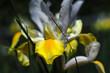 Australian wildflower in botanical gardens near Sydney