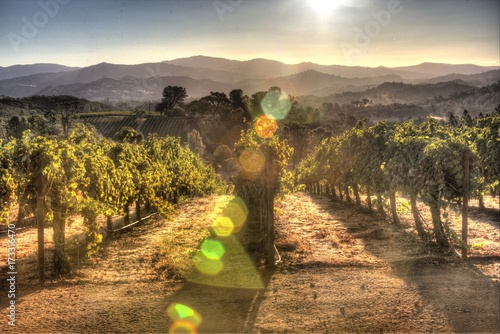 In de dag Wijngaard Sunrise Vineyard Landscape in Lake County, California