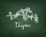Chalk sketch of thyme - 173333845