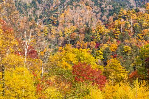 Foto op Canvas Honing Nikko National Park