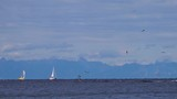 Seagulls flying over sailboats on beautiful blue summer seascape - 173410042