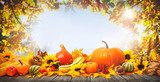 Thanksgiving background with pumpkins - 173438669
