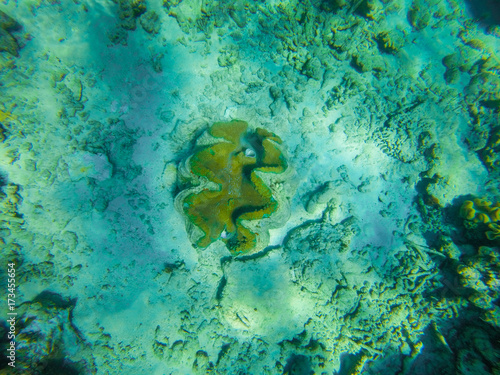 Foto op Canvas Groene koraal Snorkelling in the Great Barrier Reef