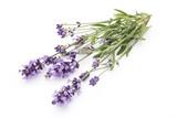 Lavender flowers. - 173457233