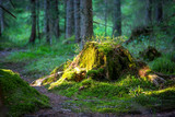 Old stump in forest - 173468449