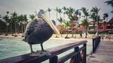 Pelican on a wooden pier with beautiful Caribbean sea and beachfront Punta Cana - 173482213