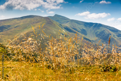Foto op Canvas Gras grass on meadow in Carpathian mountains