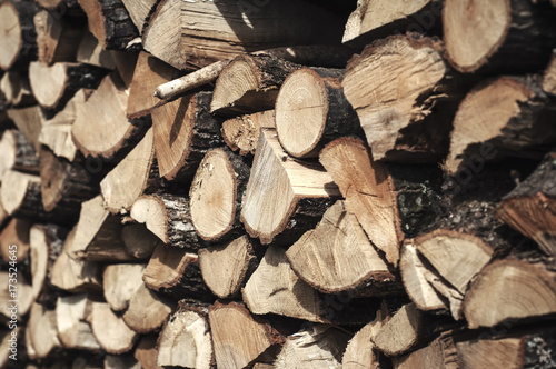 Pile of wood logs ready for winter Poster