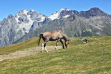 horse grazing on a background of mountains.
