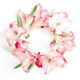 Beautiful pink gladiolus flower frame on white background. Flat lay, top view.