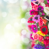 Fresh colorful anemones and roses flowers border on garden bokeh background with copy space - 173556823
