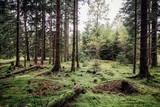 Lichtung im Nadelwald, Grüner Waldboden mit Moos bedeckt