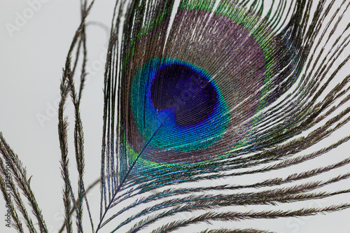 Fotobehang Pauw Peacock Feather