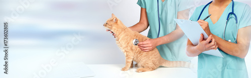 Veterinarian doctor with cat in veterinary clinic. © Kurhan