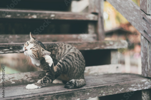 Fotobehang Kat Cat scratching