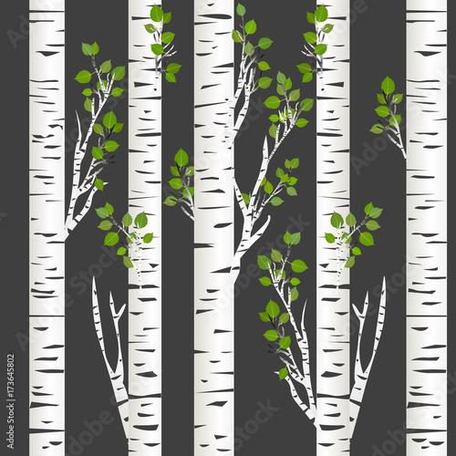 Birch trunks in night - 173645802