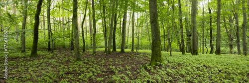 Laubwald, Müritz-Nationalpark, Mecklenburgische Seenplatte, Mecklenburg-Vorpommern, Deutschland - 173670678