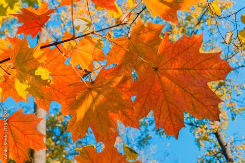Papiers peints Orange eclat Bright autumn landscape. Autumn tree leaves the blue sky background.