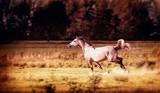 Arabian Horse running gallop at autumn field - 173682276