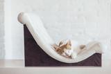 Kitten sleeps on soft couch