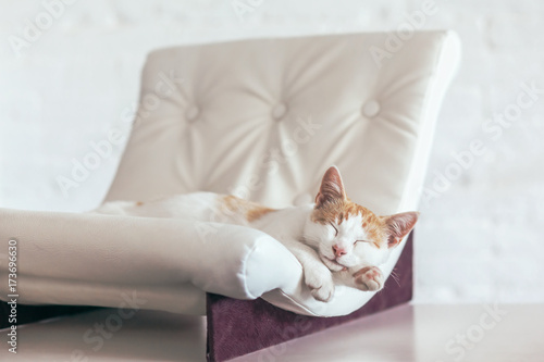 Kitten sleeps on soft couch
