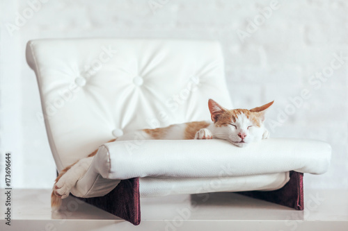 Kitten sleeps on soft couch Poster