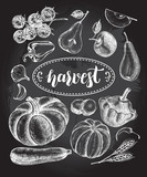 Ink hand drawn set of vegetables and fruits - cherry tomatoes, zucchini, pumpkin, patisson, pear, apple. Autumn harvest elements collection with brush calligraphy style lettering. Vector illustration. - 173707255