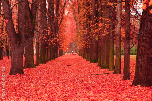 Foto op Plexiglas Bordeaux path in the autumn park