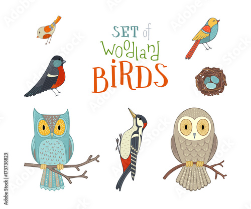 Keuken foto achterwand Uilen cartoon Vector set of woodland birds in cartoon style.