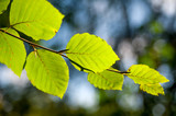 Blätter im Gegenlicht - 173747010