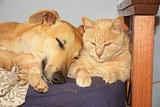 Dog and cat sleeping together  - 173751235