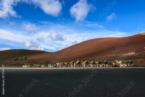 Foto op Canvas Canarische Eilanden Kamelsafari